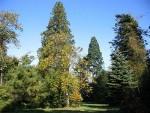 Priestfield Arboretum