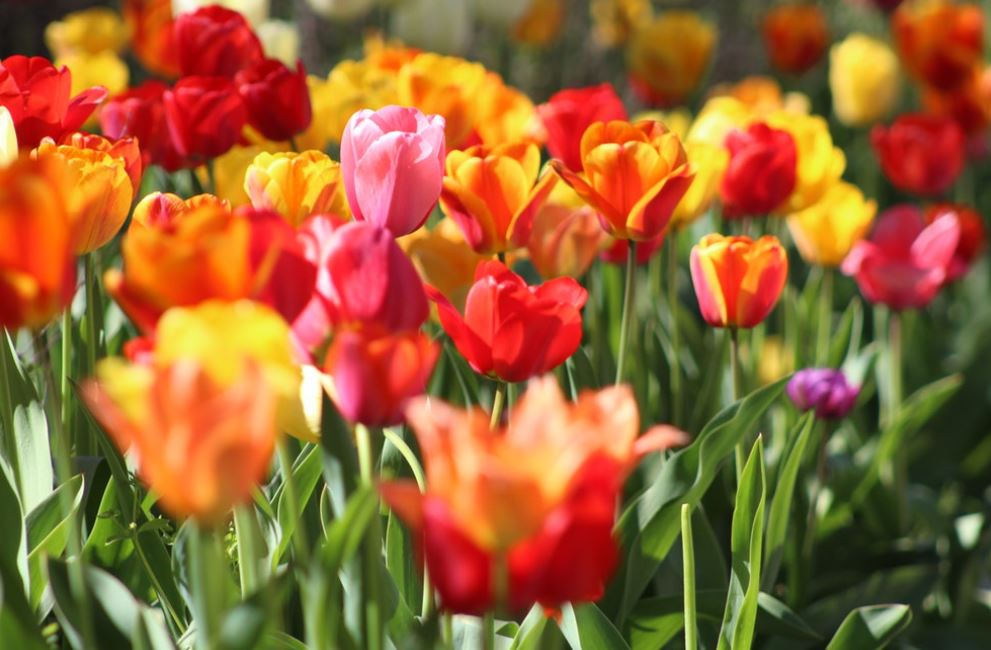 Prestwood Gardening Society Appeal for Committee Members